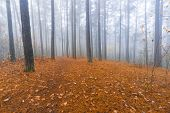 image of decomposition  - Beautiful autumnal landscape of foggy forest with fallen leaves and old tree trunks - JPG