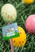 picture of laying eggs  - Easter egg hunt sign against colourful easter eggs - JPG