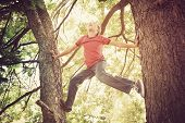 pic of daring  - Happy boy climbing a tree - JPG
