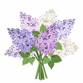 stock photo of white purple  - Vector bouquet of purple and white lilac flowers isolated on a white background - JPG