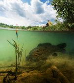 foto of freshwater fish  - Split shot of the freshwater pond with fisherman above the surface and big fish  - JPG