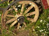 pic of wagon wheel  - old antique wagon wheel and flowers of chamomile - JPG