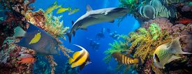 foto of fire coral  - Tropical Anthias fish with net fire corals and shark on Red Sea reef underwater - JPG