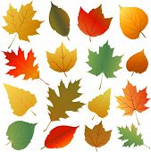 stock photo of elm  - Autumn leaves - JPG