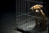 pic of inhumane  - A sad looking puppy wanted to come out from his cage - JPG