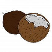 Coconut Broken Icon. Vector Illustration Of Coconut Nut. Hand Drawn Cartoon Coconut. Chopped Hairy N poster