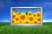 stock photo of high-def  - Large Screen Television Isolated Outdoors With Sunflower Landscape - JPG
