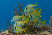 foto of coral reefs  - Beautiful reef fish on coral reefs off Florida Keys - JPG