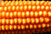 pic of maize  - close up of Maize kernel pattern on Dry Corn Ear - JPG