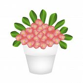 stock photo of flower pots  - Beautiful Flower An Illustration of Crown of Thorn or Euphorbia Milii Flowers with Green Leaves in Terracotta Flower Pot for Garden Decoration - JPG