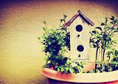 pic of house plants  -  a cute bird house in a pot with plants toned with a retro vintage instagram filter  - JPG