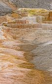 pic of mammoth  - Colorful Travertine in Mammoth Hot Springs in nature - JPG