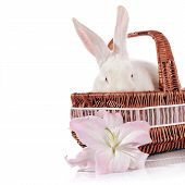stock photo of white rabbit  - Portrait of a white rabbit in a wattled basket with a white - JPG