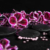 picture of geranium  - beautiful spa concept of geranium flower beads and black zen stones with drops in reflection water closeup - JPG