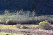 image of wetland  - Spring slowly creeps into a wetlands landscape along the Flathead River - JPG