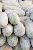 picture of muskmelon  - pile of muskmelon in local market - JPG