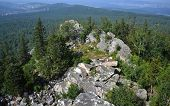 image of lichenes  - Ural mountains and national park Taganay - JPG