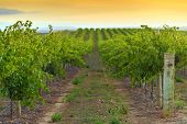 stock photo of shiraz  - One of the wineries at Barossa valley - JPG