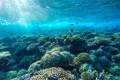 stock photo of fish  - red sea coral reef with hard corals fishes and sunny sky shining through clean water  - JPG