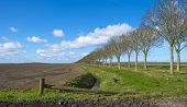 picture of row trees  - Row of trees along a ditch in spring - JPG