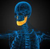 picture of jaw-bone  - 3d rendered illustration  - JPG