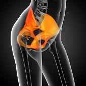 image of pelvis  - 3D medical illustration of the pelvis bone - JPG
