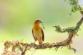 picture of grass bird  - The bird eating insect on the tree - JPG