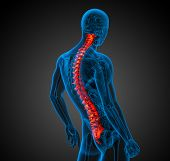 stock photo of spine  - 3d render medical illustration of the human spine  - JPG