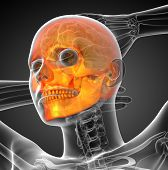 picture of mandible  - 3d render medical illustration of the skull  - JPG