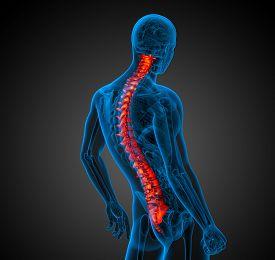 pic of spine  - 3d render medical illustration of the human spine  - JPG