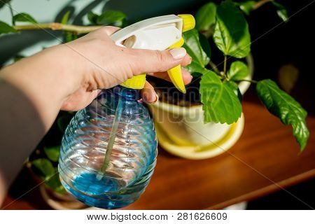 Woman Caring For House Plant