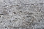 Close Up Of Old Weathered Gray Log Background poster