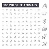 Wildlife Animals Editable Line Icons, 100 Vector Set, Collection. Wildlife Animals Black Outline Ill poster