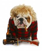 stock photo of redneck  - redneck dog  - JPG