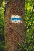 Tourist Road Sign On Tree. Tourist Mark. poster
