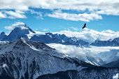 Golden Eagle Flying In Front Of Swiss Alps Scenery. Winter Mountains. Bird Silhouette. Beautiful Nat poster