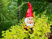 stock photo of gnome  - Garden Gnome among lemon balm plants in the garden - JPG