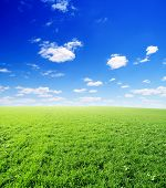 Field Of Green Grass And Blue Sunny Sky poster