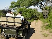 Rear view of a group of tourists in jeep looking at elephant