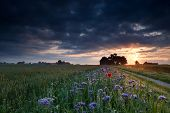Warm Summer Sunrise Over Flower Meadows