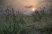 Sunrise Landscape In Summer Looking Through Wild Thistles And Grass