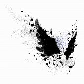 pic of fairyland  - Abstract image of black wings against light background - JPG
