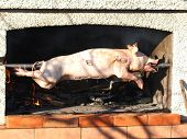 foto of farrow  - grilled pig on the broach on a sunny day