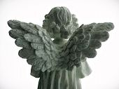 foto of cherubim  - angels wings from behind - JPG
