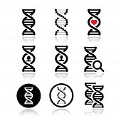 picture of gene  - Vecor icons set of DNA isolated on white - JPG
