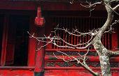picture of bonsai tree  - Temple of Literature in Hanoi - JPG