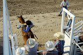 foto of bareback  - A cowboy comes out of the gate riding bareback - JPG