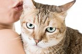 stock photo of fat lip  - Cute tabby cat in the hands of a woman - JPG