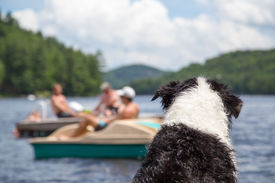 foto of dock a lake  - A wet dog sitting on the cottage dock watches people swimming and boating on Lake of Bays in Muskoka Ontario Canada - JPG
