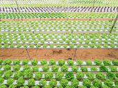 picture of hydroponics  - Hydroponic green vegetables growing in greenhouse farm - JPG